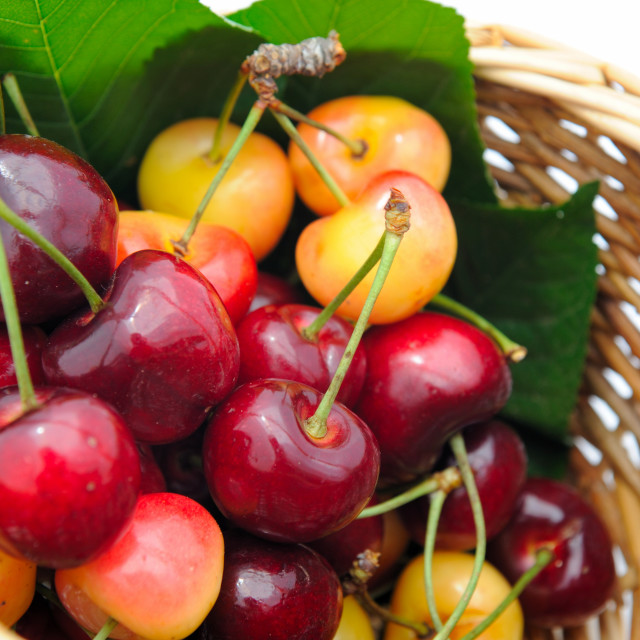 """Ripe Cherry"" stock image"