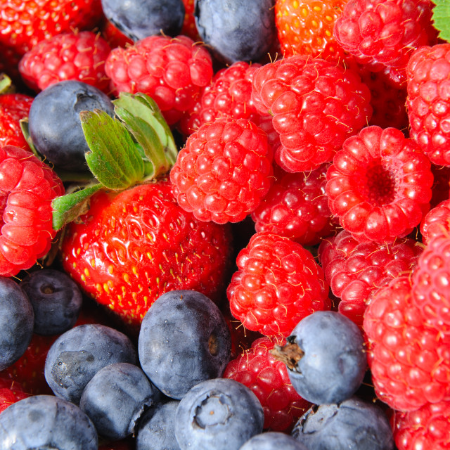 """Isolated Blackberry, Raspberry and Strawberries"" stock image"