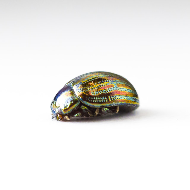 """Bright beetle"" stock image"