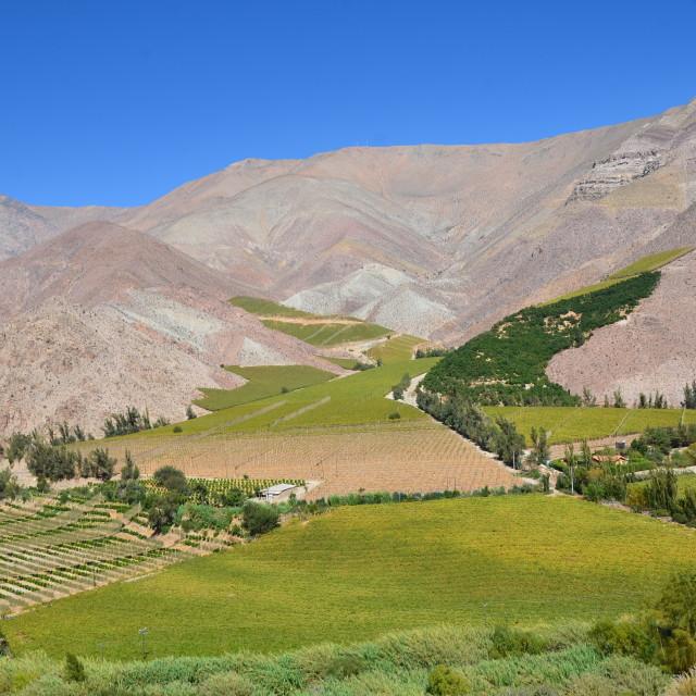 """Valle del Elqui"" stock image"
