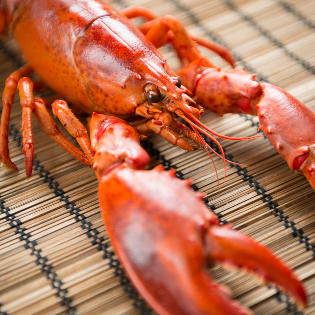 """""""Lobster"""" stock image"""