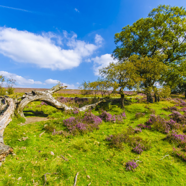 """North Yorkshire Moors"" stock image"
