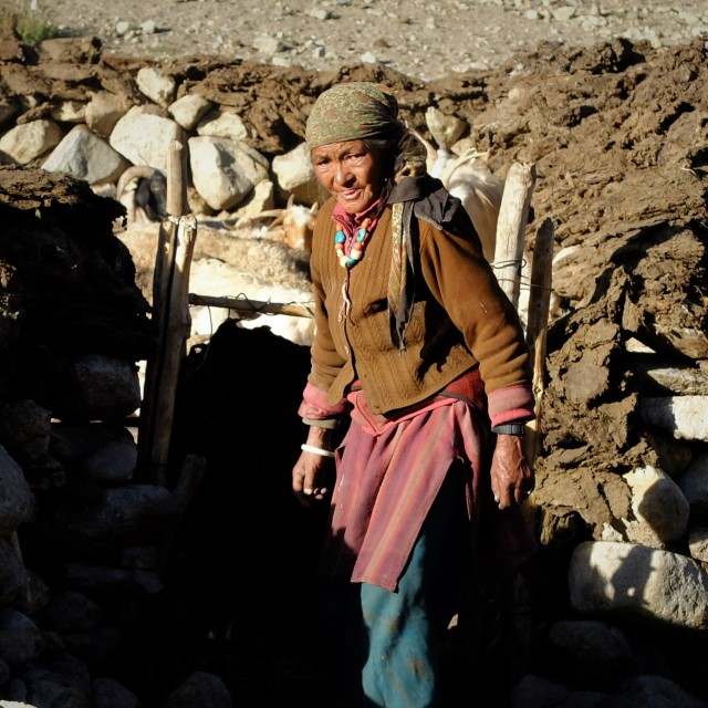 """Woman Shepherd - Ladakh"" stock image"