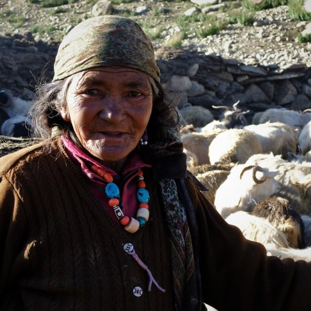 """Woman Goat Herder - Ladakh"" stock image"