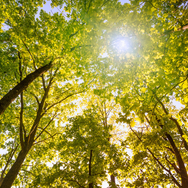 """Forest and Sky with Sun"" stock image"