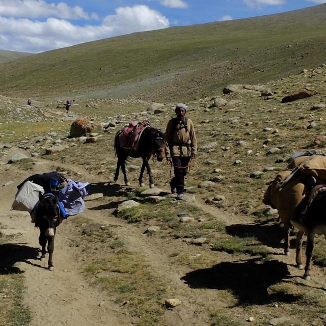 """""""Pack horses - trekking Ledakh"""" stock image"""