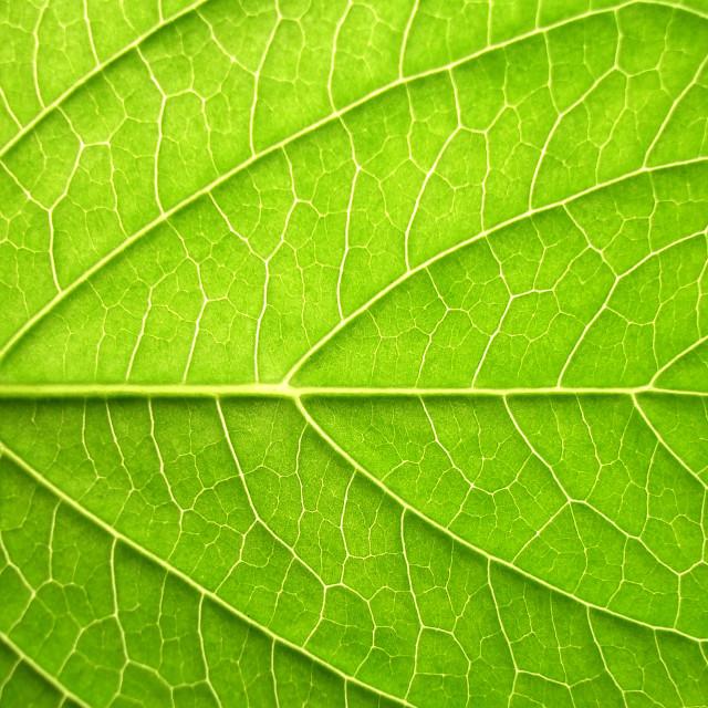"""Leaf"" stock image"