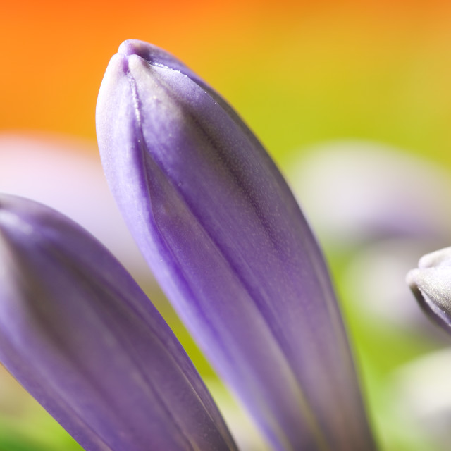 """""""Flower Abstract"""" stock image"""