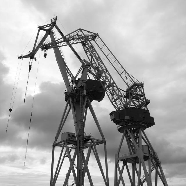 """""""cranes"""" stock image"""