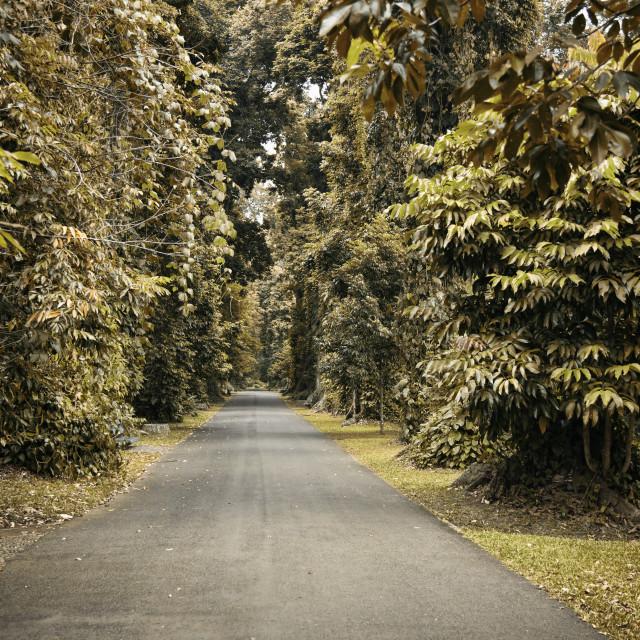 """Pathway in Autumn"" stock image"