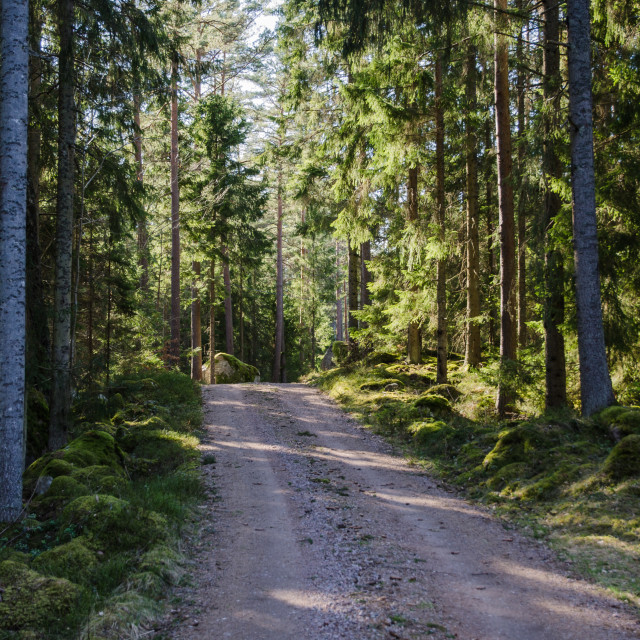 """""""Gravel road in the woods"""" stock image"""