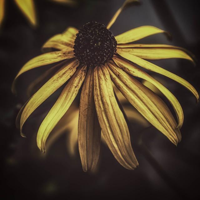 """The Yellow ..........."" stock image"
