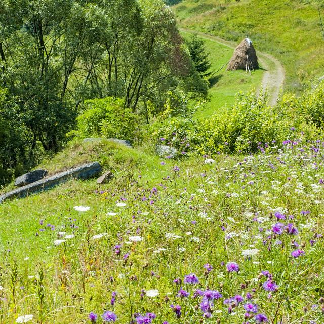 """""""Carpathians Landscape"""" stock image"""