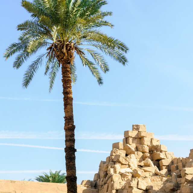 """Palm and ruins in the Karnak temple in Luxor, Egypt"" stock image"
