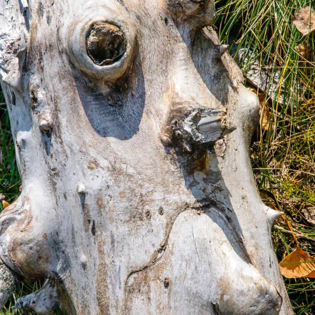 """The Sad Face-Tree"" stock image"