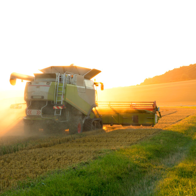 """""""Harvest in the sunset"""" stock image"""