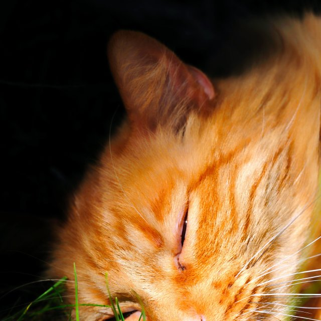 """Orange Cat"" stock image"