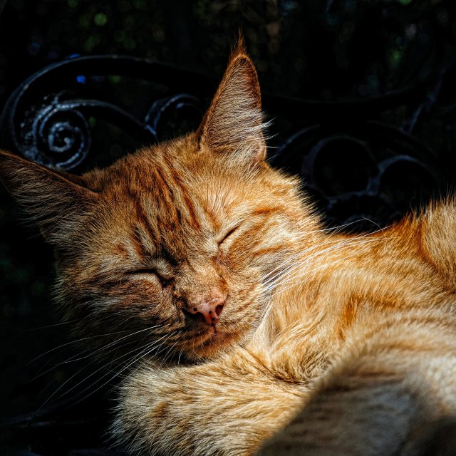 """Cat Napping"" stock image"