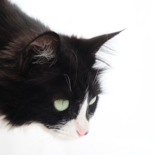 """Curious Feline"" stock image"
