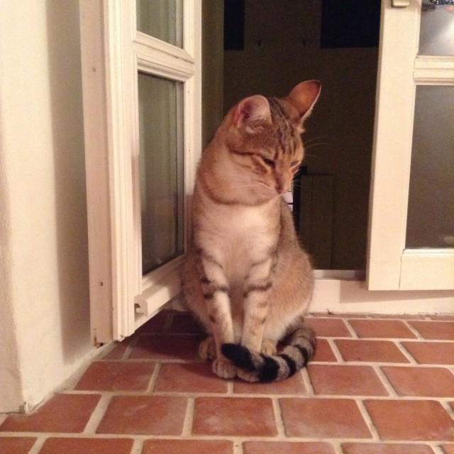"""""""Pensive Cat"""" stock image"""