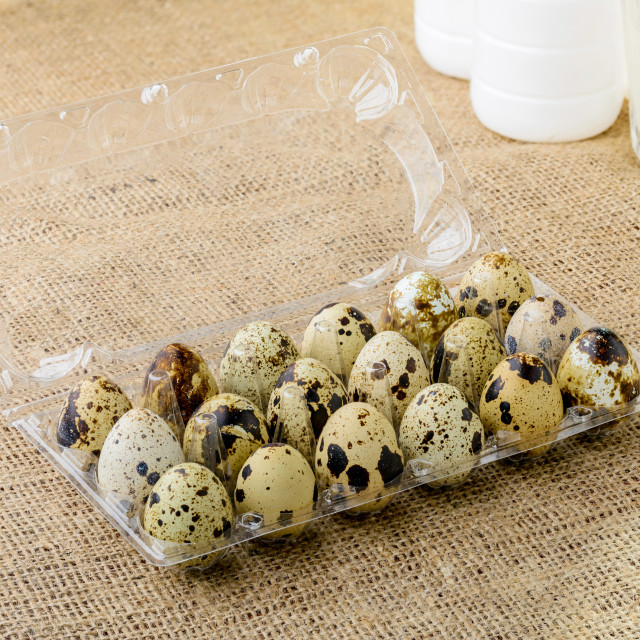 """Quail Eggs in Box"" stock image"