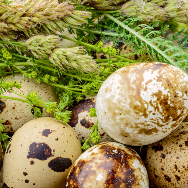 """""""Quail Eggs and Herbs"""" stock image"""