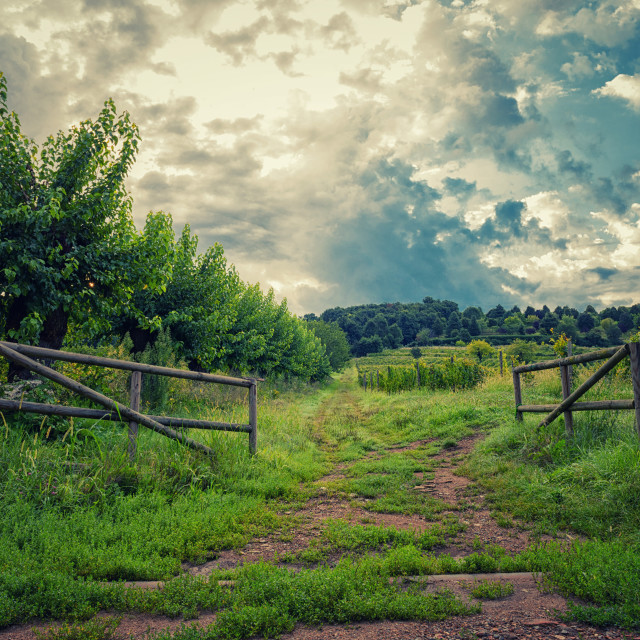 """""""The gate to the hill"""" stock image"""