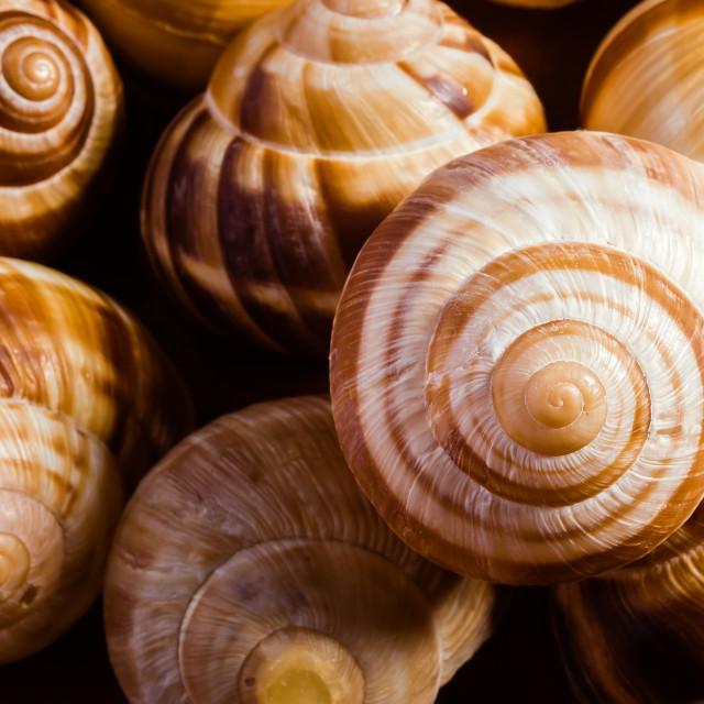 """Snail Shells"" stock image"