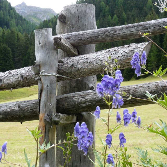 """""""Rustic fence"""" stock image"""