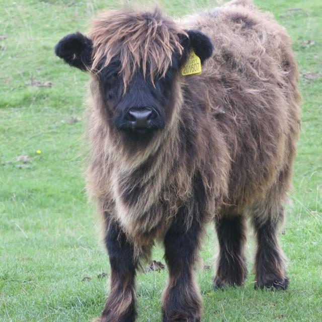 """""""Highland lad"""" stock image"""