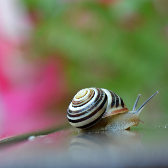 """Snail on the table"" stock image"