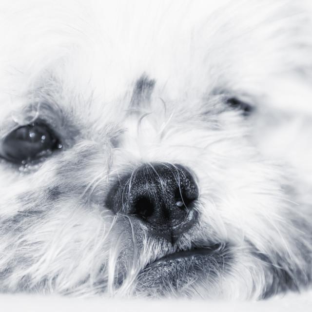 """""""Adorable bored dog thinking"""" stock image"""