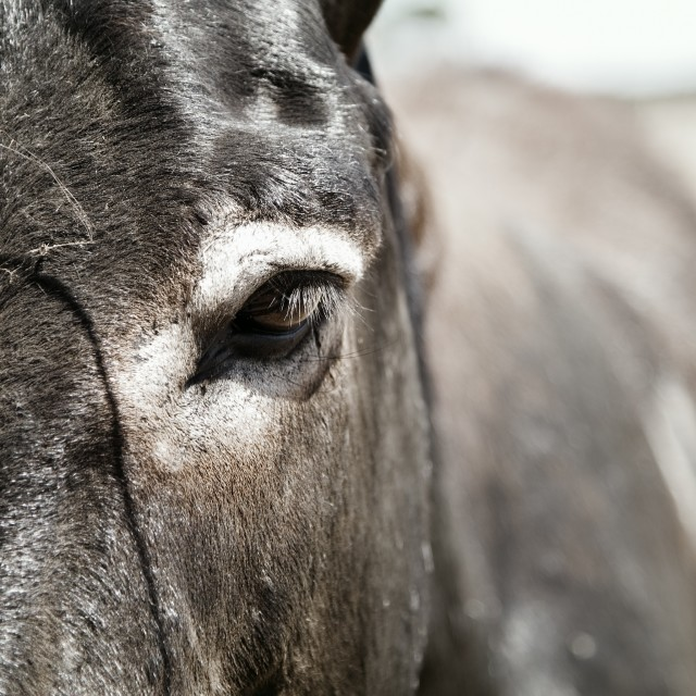 """""""Photo of a cute donkey on the farm"""" stock image"""