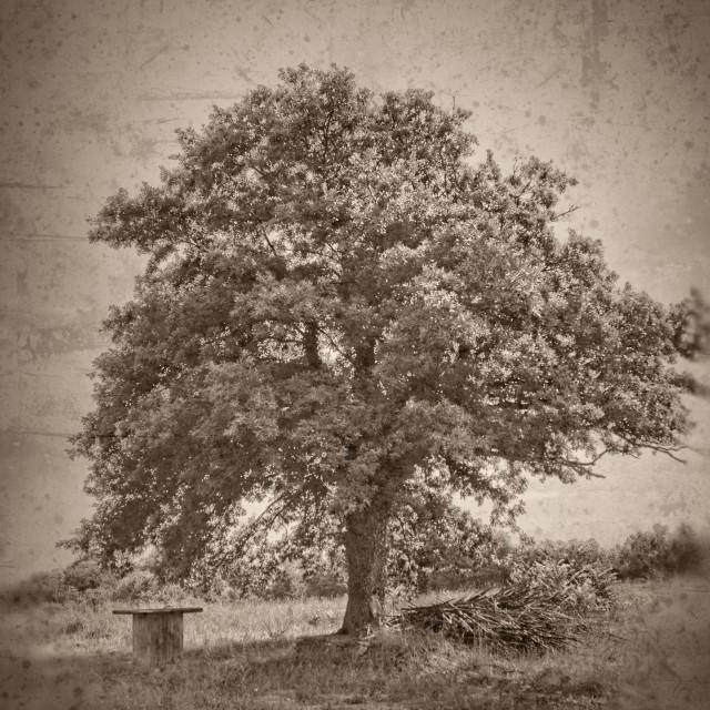 """Grunge textured collage - Oak tree"" stock image"