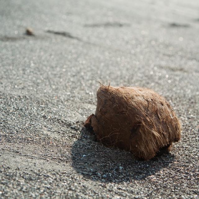 """Coconut on a sand beach , retro style toned photo"" stock image"