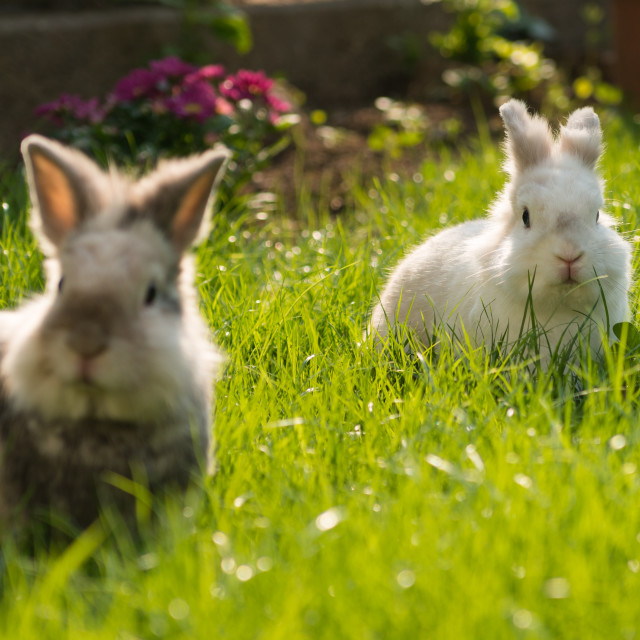 """Rabbits on meadow"" stock image"