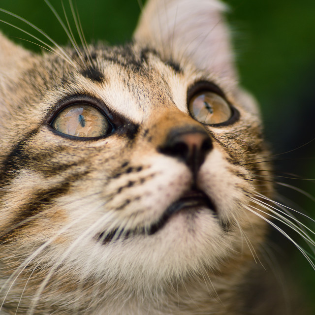 """Little cat looking up"" stock image"