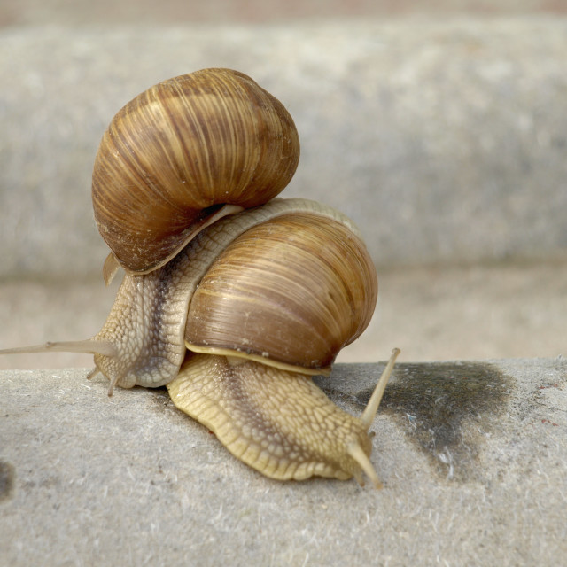 """Snails family"" stock image"