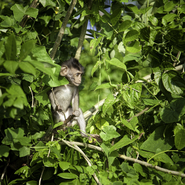 """Young wild monkey on the tree"" stock image"