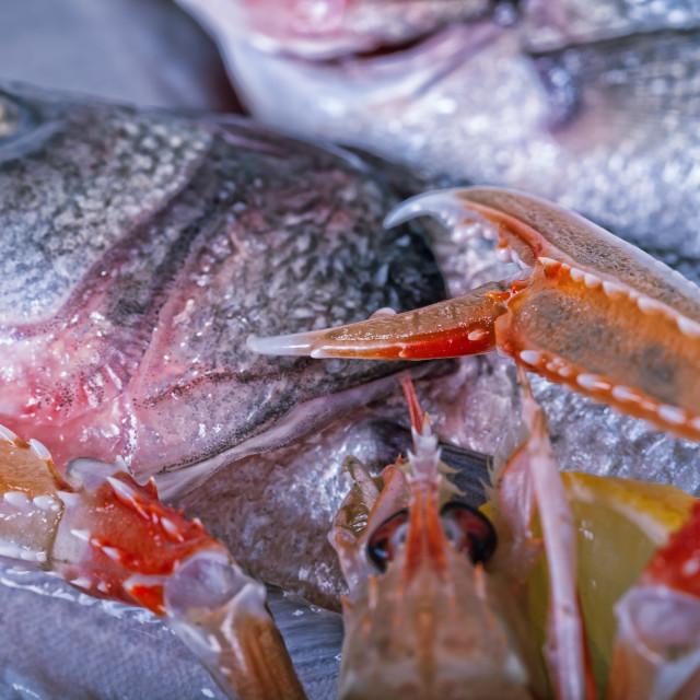 """Fresh Adriatic seafood on ice"" stock image"