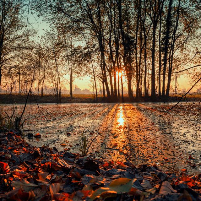 """Sunset pond"" stock image"