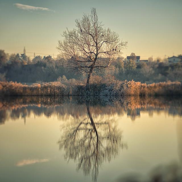 """Tree alone"" stock image"