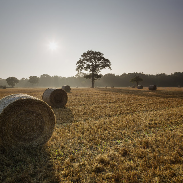 """Straw bales misty sunrise"" stock image"