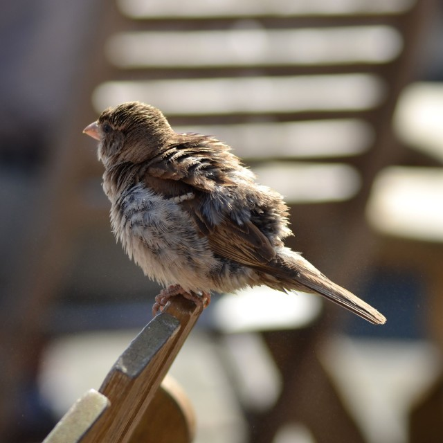 """""""Sparrow pit stop"""" stock image"""