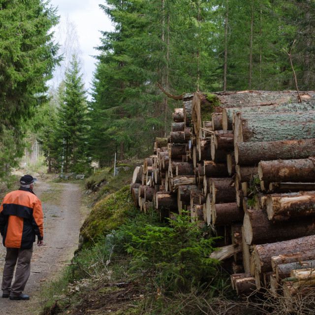 """Lumberjack at a logpile"" stock image"