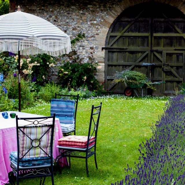 """Lavender hedge"" stock image"