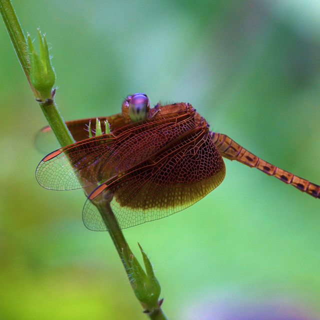 """Dragonfly on a Leaf"" stock image"