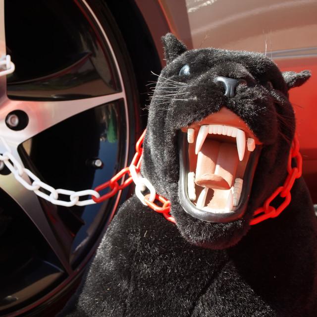 """""""Black panther"""" stock image"""