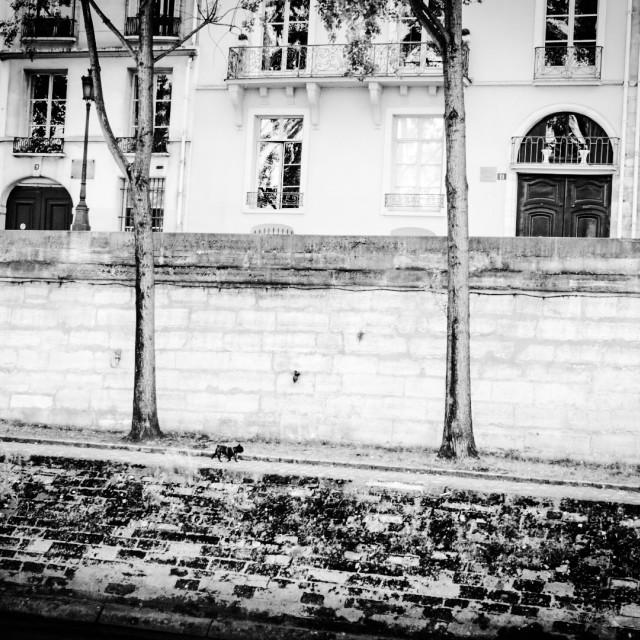 """Banks of Seine"" stock image"