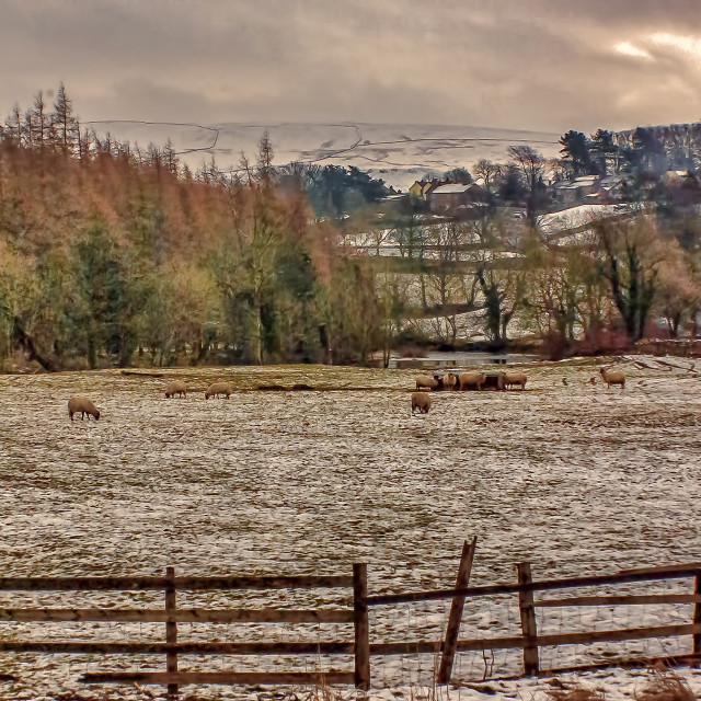 """""""Winter in the Dales"""" stock image"""